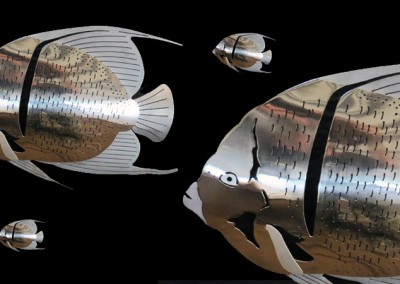 Stainless-Angelfish-1