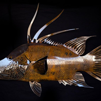 hogfish-rusty-1