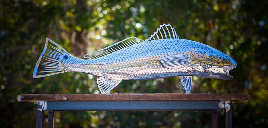 Red Drum – Polished Stainless